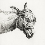 Head of a donkey by Jean Bernard (1775-1883). Original from The Rijksmuseum. Digitally enhanced by rawpixel. thumbnail