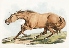 Illustration of light-brown horse from Sporting Sketches (1817-1818) by Henry Alken (1784-1851). Original from The New York Public Library. Digitally enhanced by rawpixel. (Free Public Domain Illustrations by rawpixel) Tags: aggressive angry animal antique creativecommons0 drawing drawn handdrawn henryalken horse illustrated illustration lightbrownhorse old sketch sporting sportingsketches vintage wild