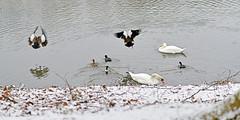 Winter StillLeben am Berger See (Michael Döring - thx for 20.000.000 views) Tags: gelsenkirchen buer bergersee schnee winterstillleben afs85mm18g d850 michaeldöring
