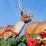 Rentiere mit rotem Schlittengeschirr vor weihnachtlichem Zaun am Rudolfplatz in Köln thumbnail