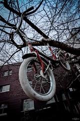 The Haunted Bicycle (TristanLohengrin) Tags: vélo arbre ciel tree bicycle haunted hanté stephen king fear peur enfant kid impact fly flying vole bicyclette horror creepy abandonnée urbex france