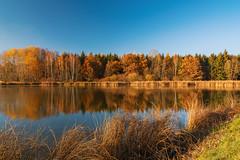 Teichgebiet Wolche  (8) (berndtolksdorf1) Tags: deutschland thüringen wolche teichgebiet teich jahreszeit herbst autumn bäume wald farben outdoor wasser spiegelung