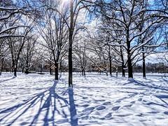 shadows in the snow (ekelly80) Tags: dc washingtondc january2019 winter snurlough snow snowstorm shutdown trumpshutdown snowday snowywalk white snowy nationalmall trees light sun bright shadows snowcovered
