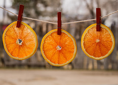 018/365 Out to Dry (Helen Orozco) Tags: day18365 365the2019edition caracaa orange citrus fruit slices