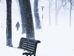 histoire d'une tempête (photosgabrielle) Tags: photosgabrielle hiver neige winter snow tempêteneige urban montréal montrealbw blackwhite bwphotography bwmontreal people personnage park bench urbain parc banc