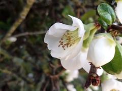 Flowers of Paradise (Serene Mountain) Tags: white yellow spring flowers darkgreen flower macro closeup