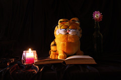 OK children, settle down and I'll tell you a little story ... (Snorkle-suz) Tags: smileonsaturday crazystilllife book candle flower crazyobject garfield candlelight litcandle driedflower pink catsofttoy orange cute fun funny humor happy stilllife classicstilllifestyle tabletop storytelling aotearoa nz newzealand canoneos600d canoneosrebelt3i canoneoskissx5 1855mm 18to55mm