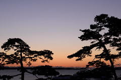 Pine river (kat-taka) Tags: tree shiluette sea sunrise sky shadow morning japan