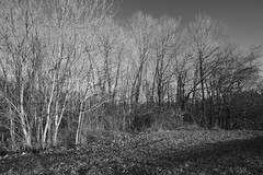Winter Southern Exposure (Modkuse) Tags: nature natural winter sunrise southernexposure art artphotography fineartphotography fineart photoart monochrome bw blackandwhite landscape fujifilm fujifilmxt2 xt2 xf1024mmf4rois fujinon fujinonxf1024mmf4rois