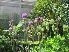 RBG Centre 5 (D. S. Hałas) Tags: halas hałas canada ontario haltonregion wentworthcounty burlington aldershot royalbotanicalgardens botanicalgarden rbgcentre greenhouse glasshouse