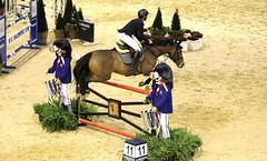 AW3Z8067_R.Varadi_R.Varadi (Robi33) Tags: basel pferd pferdesport reiter reiterin reitsport pruefung schiedsrichter springen sport uebungen schweiz trophy zuschauer internationalesweltklassespringturnier