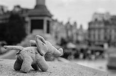 elephant left on a ledge (lake.light) Tags: england london trafalgar trafalgarsquare stuffedanimal elephant abandoned toy doll film blackandwhite bw bnw 35mm filmphotographic