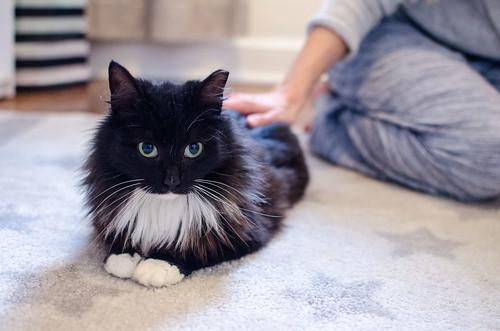 Blue Collar Cat Sylvie 4
