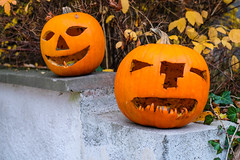 (formwandlah) Tags: kaiserslautern herbst autumn landscape fujifilm fuji xt20 pfälzerwald meike 35mm f17 orange pumpkin helloween kürbis pumpkins kürbisse