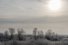 *** (Woodmen19) Tags: russia kirovregion 2018 november autumn nature crystal frost landscape flora plants meadow grass trees shrubs sky clouds light