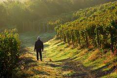 Rolando in vigna 1 Langhe 18 (zanf89) Tags: neive alba langhe piemonte colline vino barolo nocciole