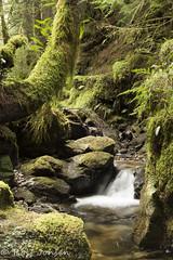 Pucks Glen (rjonsen) Tags: scotland alba nature tree green gorge river motion blur frozen