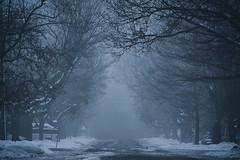 Insert Horror Story Here (flashfix) Tags: november252018 2018inphotos flashfix flashfixphotography ottawa ontario canada nikond7100 55mm300mm neighbourhood street bokeh trees fog winter snow blue puddles mist mistylane
