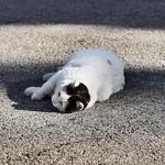 F#gatoanegas F#gatos #gatoscallejeros #cats #photocats #instacats #neko #meow #gatze #gatto #koshka #catsofworld #catsofinstagram #streetcats #chat #gatosdeinstagram #gatosdecolonia #barcelonagatigos thumbnail