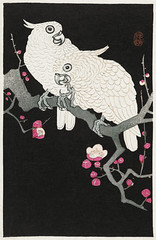 Two cockatoo and plum blossom (1925 - 1936) by Ohara Koson (1877-1945). Original from The Rijksmuseum. Digitally enhanced by rawpixel. (Free Public Domain Illustrations by rawpixel) Tags: pdproject21batch2x otherkeywords tagcc0 animal antique art asian bird cockatoo drawing illustration japan japanese koson museum ohara oharakoson old paint plumblossom rijksmuseum tree vintage
