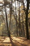 Kaapse bos (Frans1983) Tags: sonya57 woods autumn autumncolors light sunlight tree sonyalpha57
