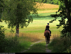20180803_04 Chestnut horse & rider on gravel road | The trail Bohusleden, section 16 - Kaserna to Harska | Bohuslän, Sweden (ratexla) Tags: nonhumananimals ratexlasbohusledenhike bohusleden bohusledenetapp16 3aug2018 2018 canonpowershotsx50hs bohuslän sweden sverige scandinavia scandinavian europe earth tellus travel travelling traveling journey epic photophotospicturepicturesimageimagesfotofotonbildbilder wanderlust vacation holiday semester trip backpacking resaresor europaeuropean sommar summer ontheroad nordiccountries norden skandinavien hiking hike beautiful vandra vandring horse horses nonhumananimal cute cool life organism animals animal häst hästar djur chestnut fux homosapiens person people human humans woman women girl girls chick chicks rider riders grass field fields gräs vandringsled vandringsleder landscape trails