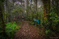 Lamington Border Track (NettyA) Tags: 2015 australia janetteasche lamingtonnationalpark oreillys qld queensland sonya7r unescoworldheritage rainforest scenicrim seqld bordertrack track trail people hiking bushwalking sign misty