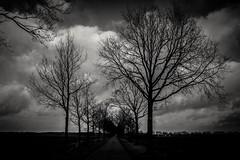 Spaziergang (bc-schulte) Tags: fujifilm xt20 xf23mm schwarz weiss blackwhite landschaft landscape