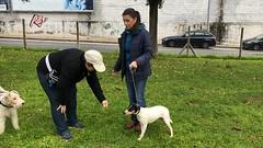 IMG_8541 (Doggy Puppins) Tags: educación canina adiestramiento canino perro dog