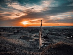 After the storm (J.C. Moyer) Tags: melancholy rustic appleiphone8 iphone8 feather clouds storm calm wind sunset sand sea beach