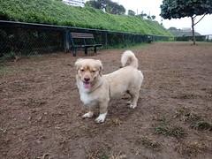 Lima - Canil de Miraflores (Santiago Stucchi Portocarrero) Tags: lima perú santiagostucchiportocarrero miraflores roni perro can cane dog hund chien hound