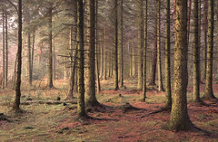 In the Fringes (Glenn D Reay) Tags: burnhope burnhopenaturereserve woods trees evening softlight goldenhour sidelighting pentaxart pentax k70 sigma1770hsm glennreay