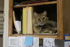 A cat sits in a shelf behind the front desk of Durham Veterinarian Clinic, located in Greensboro, Georgia.