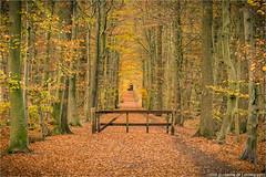 _autumn (l--o-o--kin thru) Tags: coesfeld kreuzweg