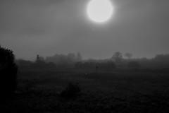 Fog (Anna Gurule) Tags: bw black white blackandwhite monochrome mornings sun night