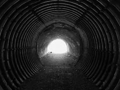 Steampunk Doctor Who (Jason_Hood) Tags: harbornewalkway harbornerailway tunnel bridge disused abandoned railway railroad blackandwhite monochrome
