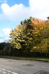 DSC_2235 (PeaTJay) Tags: nikond750 reading lowerearley berkshire gardens outdoors flora fauna plants flowers trees bushes