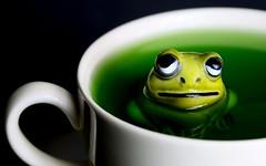 green tea dipper (HansHolt) Tags: green tea dipper frog cup teacup eyes ceramic figurine macro dof black background canoneos6d canonef100mmf28macrousm macromondays hmm