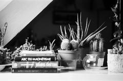 Cosy room (Camillelcrt) Tags: bw noir et blanc cactus hp5 zorki zorki4k