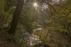 Heddon Valley (Rocacidi) Tags: nature nationaltrust heddonvalley exmoor walking hiking coastpath devon britain uk river natureinfocusgroup
