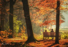 Enjoying Autumn (arjennoord) Tags: landscape dutch sunlight forrest sunrise colour trees autumn
