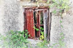 Blackberry window (phileveratt) Tags: window windowwednesdays windowwednesday happywindowwednesday hsos canon eos77d efs18135 corfuwindow blackberry bramble
