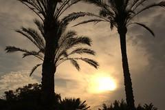 Atardecer en Málaga. (Lucio José Martínez González) Tags: luciojosémartínezgonzález málaga puestadesol sunset árboles trees sol sun landscape paisaje españa spain ngc