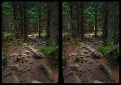 Hiking trail 3-D / CrossView / Stereoscopy / HDRi (Stereotron) Tags: sachsenanhalt saxonyanhalt ostfalen harz mountains gebirge ostfalia hardt hart hercynia harzgau elend schierke schnarcherklippen wald forest woods outback backcountry wilderness deutschland germany europe cross eye view xview crosseye pair free sidebyside sbs kreuzblick bildpaar 3d photo image stereo spatial stereophoto stereophotography stereoscopic stereoscopy stereotron threedimensional stereoview stereophotomaker photography picture raumbild twin canon eos 550d remote control synchron kitlens 1855mm 100v10f tonemapping hdr hdri raw