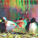 Ducks Rotterdam 3D thumbnail