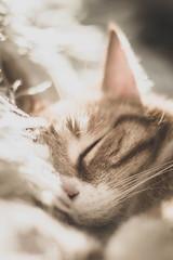 Warm dreams (SethBahl) Tags: cat ginger tabby sleeping sun light domestic