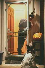 Trick or Treat (flashfix) Tags: october312018 2018inphotos flashfix flashfixphotography ottawa ontario canada nikond7100 55mm300mm portrait sock dog canine animal pet austrailanshepherd triaustrailanshepherd bluemerle tricolour heterochromia costume ghost 2spooky4u pumpkin scott man family