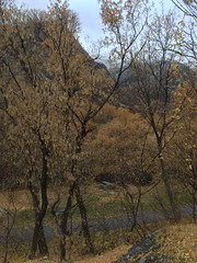 IMG_2860 (August Benjamin) Tags: provorivertrail provocanyonparkway provocanyon provoriver provo orem fall utah mountains trees fallcolors