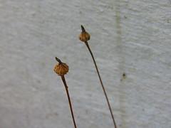 (anaritaperalta) Tags: parede minimal planta