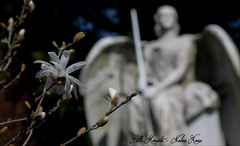 The Flower and the Angel (darkangel1910) Tags: remscheid friedhof cemetery cemeteries fotografie friedhöfe forthelovetothedetail flügel engel europa erinnerung europe angel arte ausdemherzenfotografiert art angels amore liebe love leidenschaft liebezurfotografie photography passion photo pictures cimetière cimitero gothic graveyard grabmal grabstätte gedenksteine grabmäler gravestones gottesacker flower flowers blume lightandshadow lichtundschatten liebezumdetail germany deutschland detail